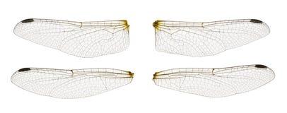 Libelleflügel Stockfoto