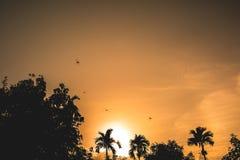 Libellen, die in Himmel mit Sonnenuntergang fliegen Lizenzfreie Stockfotografie