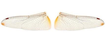 Libellen-Flügel Lizenzfreie Stockbilder