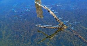 Libellen-Schwarm Stockfotos