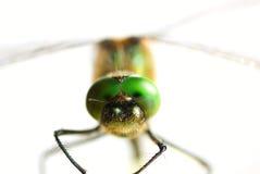 Libellenahaufnahme Stockbild