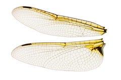 Libellenflügel lokalisiert auf Weiß Stockfoto