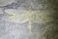 Libellenfossil stockbild