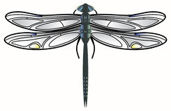 Libellevektor. Stockfoto