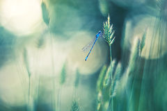 Libellula blu sull'erba Bella priorità bassa di vettore con Bokeh Immagini Stock Libere da Diritti