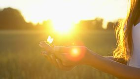 Libellula che riposano sulla fine femminile della mano su e mosche via su fondo sul giacimento di grano nel tramonto Concetto di  stock footage