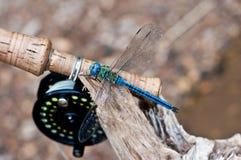 Libellula che si siede vicino alla barretta di pesca con la mosca fotografia stock