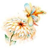 Libellula di volo con Lily Flower Immagini Stock