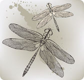 Libellula di volo, mano-illustrazione. Illustratio di vettore royalty illustrazione gratis