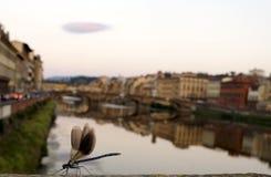 Libellula a Firenze Immagini Stock Libere da Diritti
