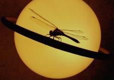 Libellula su un anello di Saturno. Fotografie Stock Libere da Diritti