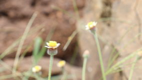 Libellula sul fiore stock footage