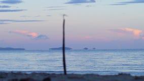 Libellula sul ramo alla spiaggia video d archivio