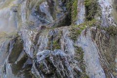 Libellula sulle pietre bagnate in Lago-Naki fotografia stock libera da diritti