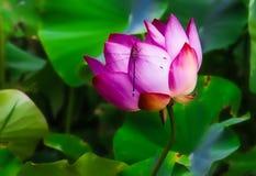 Libellule détendant sur une fleur Photos stock