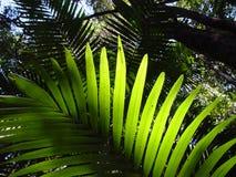 Libellule de forêt humide Photos stock