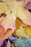 Libellule en automne Photos libres de droits