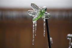 Libellule glacée Image libre de droits
