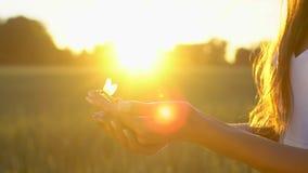 Libellule se reposant sur la fin femelle de main, et mouches loin sur le fond de sur le champ de blé dans le coucher du soleil Co banque de vidéos