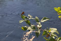 Libellule sur une branche avec le fond de l'eau Photos stock