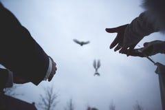 Liberazione delle colombe di cerimonia Fotografie Stock Libere da Diritti