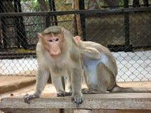 Liberdade do macaco imagens de stock
