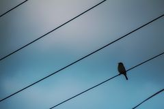Libere como un pájaro Imagen de archivo libre de regalías