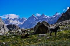 Libere en las montañas Imagen de archivo