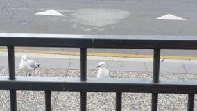 Liberi gli uccelli Fotografia Stock