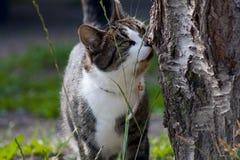libertà del gatto Immagine Stock Libera da Diritti