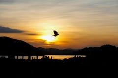 Libertà dell'uccello Immagine Stock
