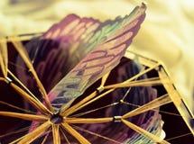 libertà leggiadramente di sogno dell'uccello di angelo catturata piuma fotografia stock