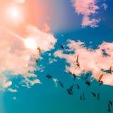 Libertad del vuelo de la paloma Imagen de archivo libre de regalías