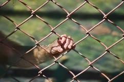 Libertad para el animal salvaje Foto de archivo