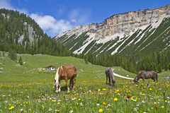 Liberty horses in the mountains Stock Photos