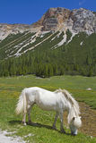 Liberty horses in the mountains Royalty Free Stock Image