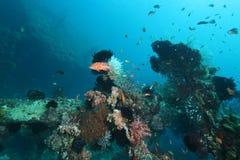 Liberty shipwreck Stock Image