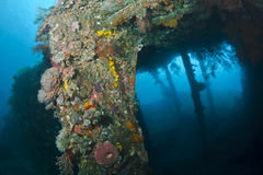 The Liberty Wreck Stock Image