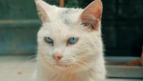 Libra do gato Close-up disparado da vida dispersa desabrigada branca do gato no abrigo animal Abrigo para o conceito dos animais filme