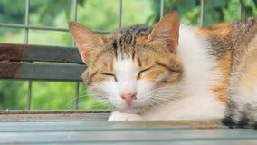 Libra do gato Close-up disparado da vida dispersa desabrigada do gato no abrigo animal Abrigo para o conceito dos animais vídeos de arquivo