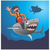 Librar el tiburón Foto de archivo libre de regalías