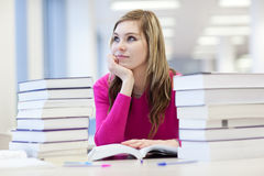 In the library Stock Images