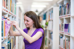 In the library Stock Photography