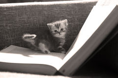 Library kitten Royalty Free Stock Photos