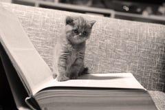 Library kitten Stock Photo