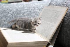 Library kitten Stock Photos