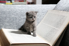 Library kitten Royalty Free Stock Photos