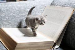 Library kitten Stock Image