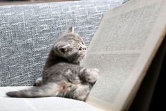 Library kitten Royalty Free Stock Photography