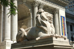 Library Lion Stock Photos
